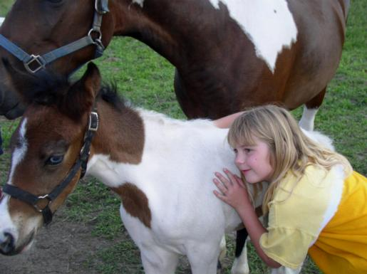 Watchful mare eyes new friends
